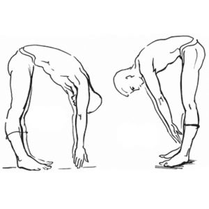 наклоны вперед - непременное упражнение утренней зарядки
