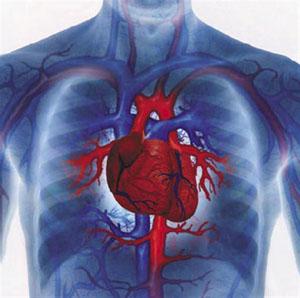обливания противопоказаны людям с сердечно-сосудистыми заболеваниями