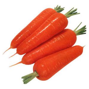 европейский вид моркови