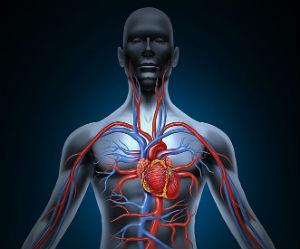 финик полезен для сердца