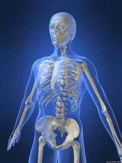 действие витамина D направлено на поддержание костей в нормальном состоянии