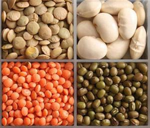 питание не должно страдать от дефицита белковых продуктов