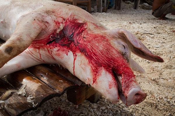 вегетарианство начинается с осознания того, что животные страдают ради того, чтобы мы ели