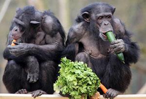 эволюционно в своем естественном потреблении мы - преимущественно вегетарианцы
