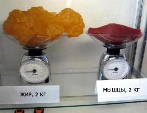 жир и мышечная ткань - два способа запаса энергии организмом