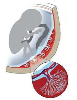 спазмированные от курения сосуды ухудшают кровоснабжение плода